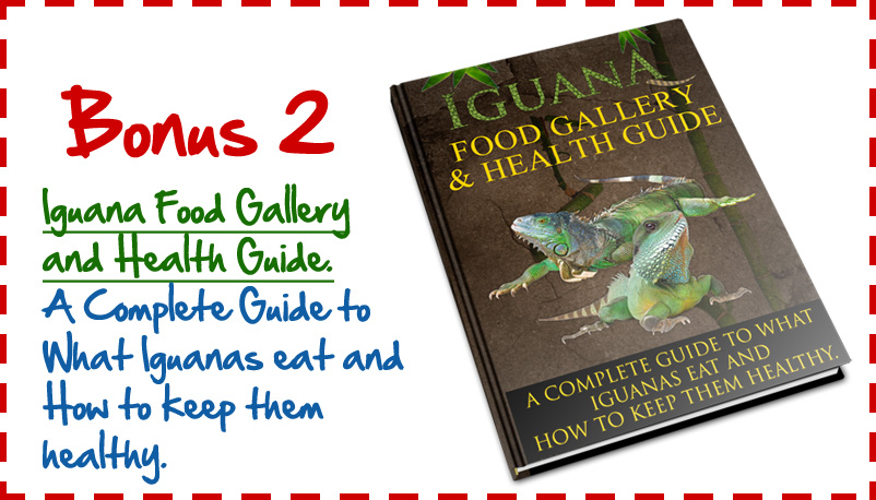 Bonus2 Ultimate Guide To Iguana Care