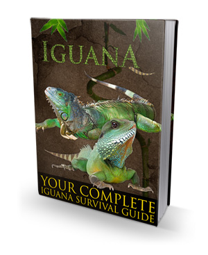 PaperBackGuideS Ultimate Guide To Iguana Care