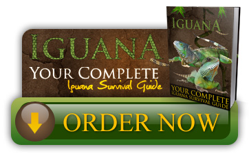 order Ultimate Guide To Iguana Care