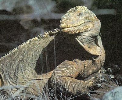 information Iguana Information   The Different and the Similar