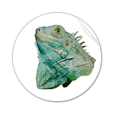 lizard Iguana Lizard   Tips on Proper Iguana Lizard Care