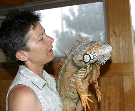 pet Pet Iguanas   What can You Expect from Them?